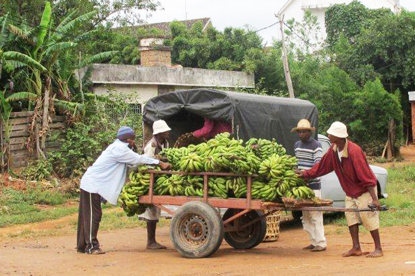 BANANAS COMMING IN TO CITY FOR SALE
