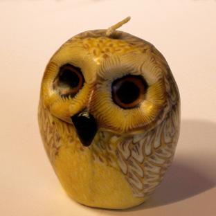 SC OWL 7033WEB
